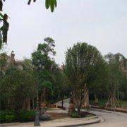 托斯卡那别墅区